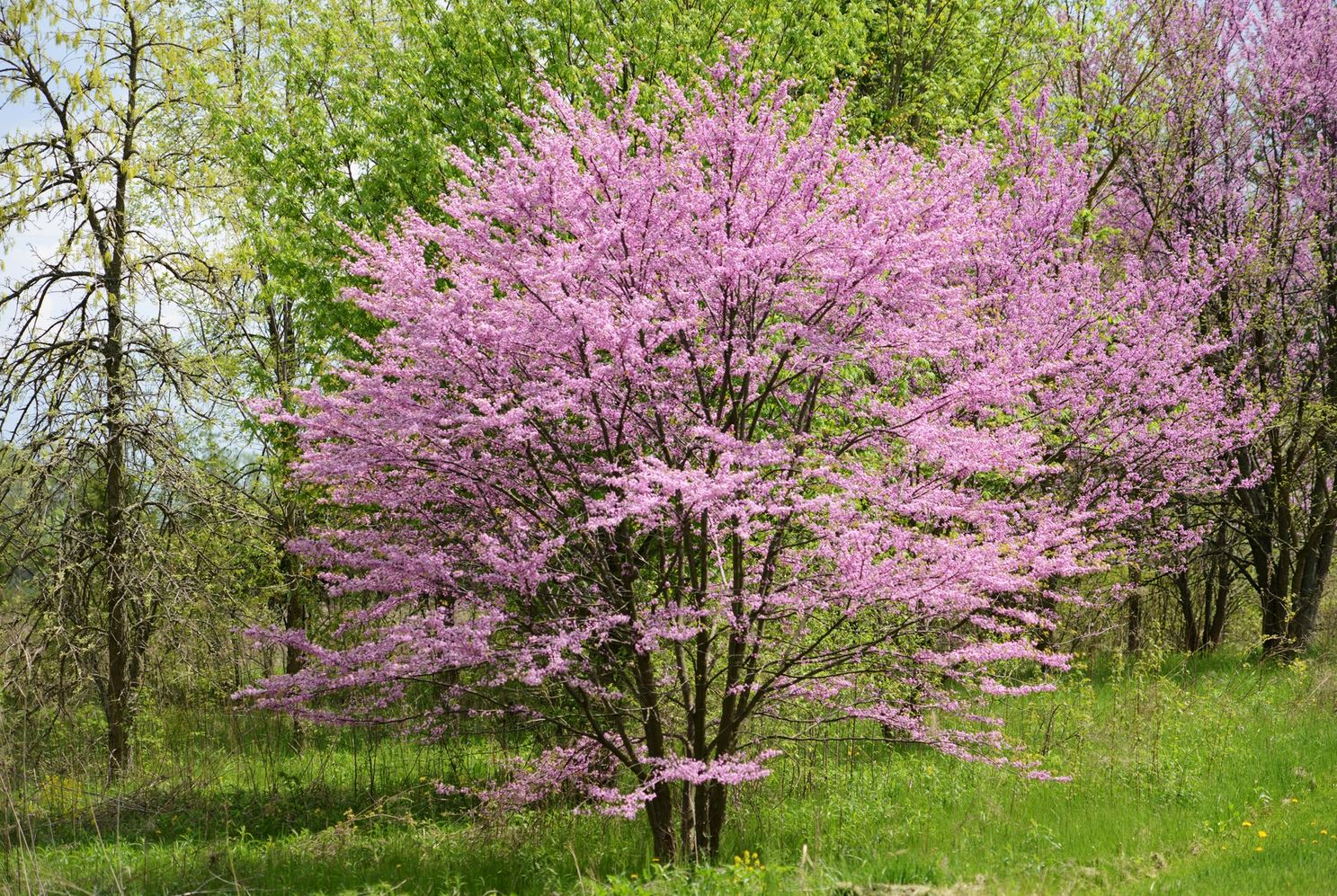 Most Beautiful Flowering Trees 28 Images The 10 Most Beautiful