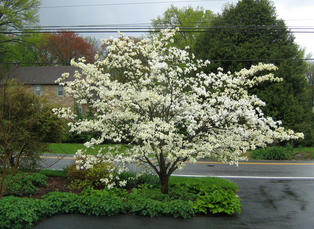 The 10 most beautiful ornamental trees for your yard the homesource serviceberrys brilliant white flower adds an ethereal look to any spring garden clusters of berries attract birds and can be used in pies mightylinksfo